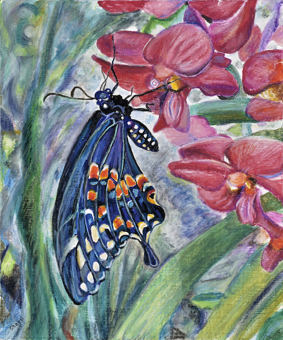 black swallowtail on red orchids, shakti sarkin